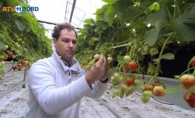 Webvideo's RTV Noord
